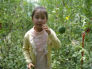 跟我一起去采摘【西瓜】 - 童真年代 - 曼游童年