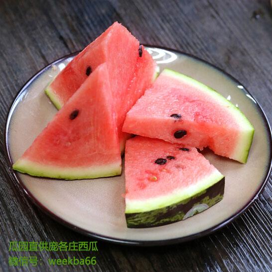 在最美的季节吃最好的庞各庄西瓜!
